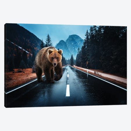 Lost Kamchatka Brown Bear in the Dolomites Canvas Print #KFD143} by Kathrin Federer Canvas Art