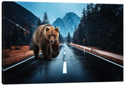 Lost Kamchatka Brown Bear in the Dolomites Canvas Art Print