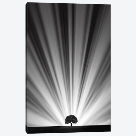 Master Tree Canvas Print #KFD144} by Kathrin Federer Canvas Art Print