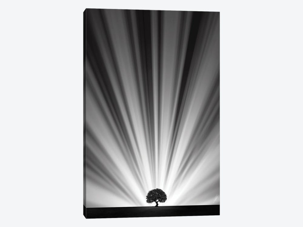 Master Tree by Kathrin Federer 1-piece Canvas Art Print