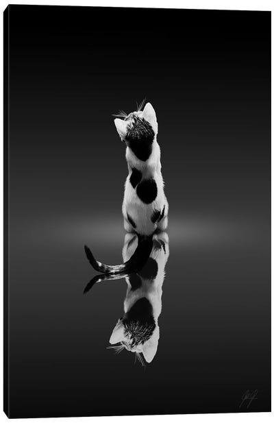 Mirroring Cat Canvas Art Print