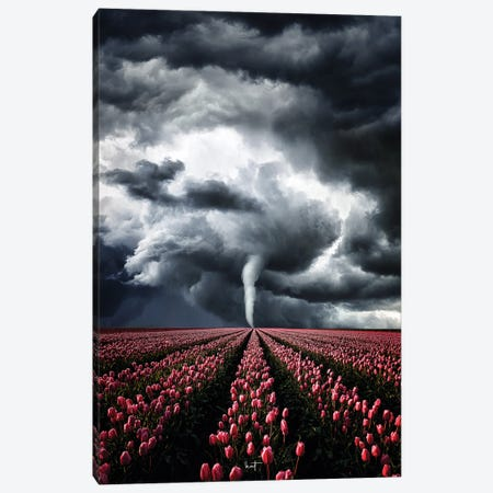 Tulips Braving The Storm Canvas Print #KFD194} by Kathrin Federer Canvas Wall Art