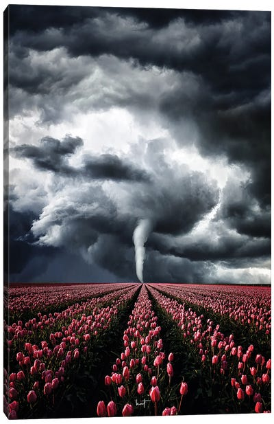 Tulips Braving The Storm Canvas Art Print