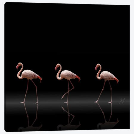 Flamingo Parade Canvas Print #KFD19} by Kathrin Federer Canvas Art Print
