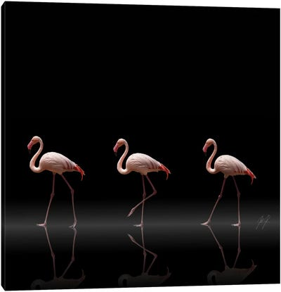 Flamingo Parade Canvas Art Print