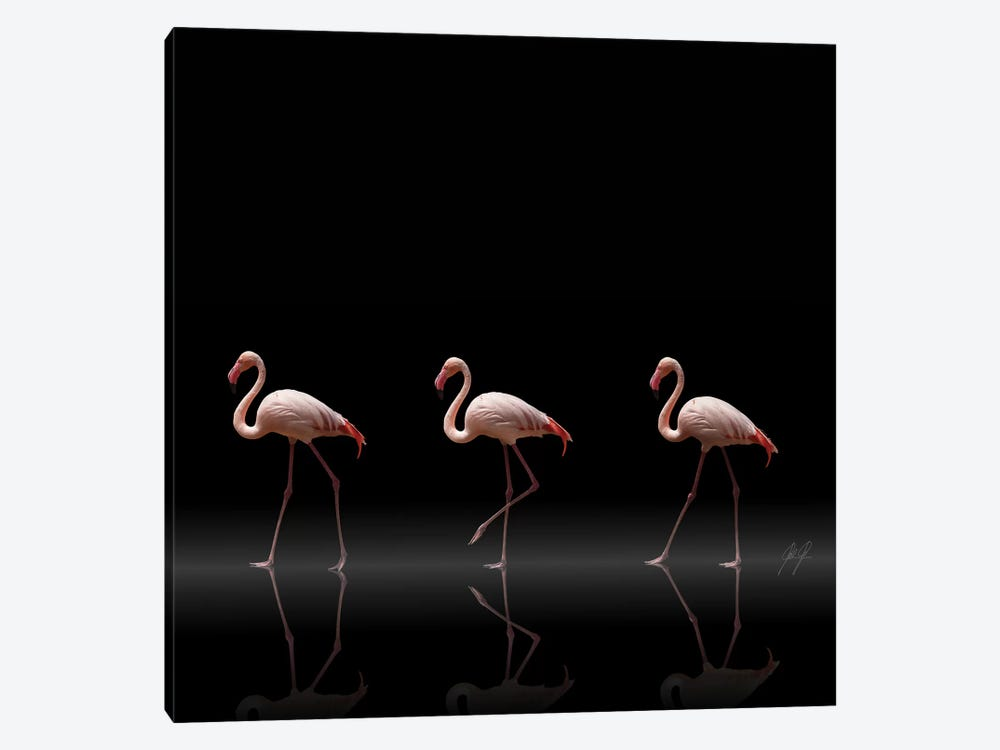Flamingo Parade by Kathrin Federer 1-piece Canvas Art Print
