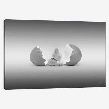 Which Came First Canvas Print #KFD55} by Kathrin Federer Canvas Art