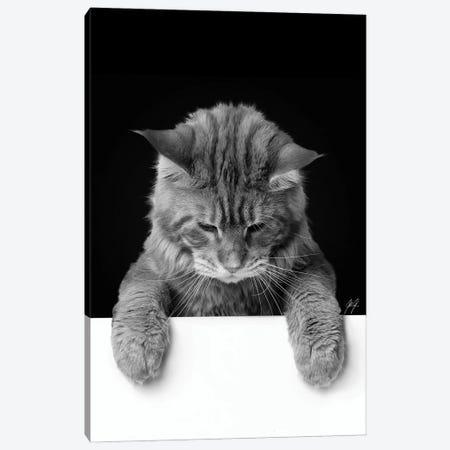 Cute Cat I Canvas Print #KFD59} by Kathrin Federer Canvas Print