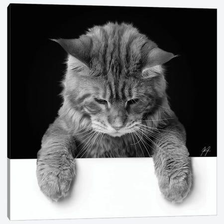 Cute Cat II Canvas Print #KFD60} by Kathrin Federer Canvas Wall Art