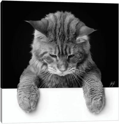 Cute Cat II Canvas Art Print