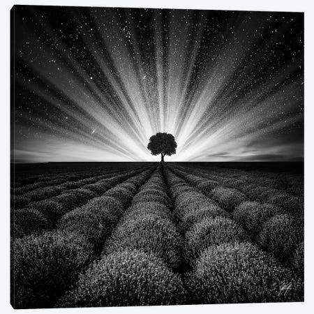 Illuminated Horizon I Canvas Print #KFD73} by Kathrin Federer Art Print