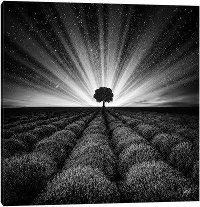 Illuminated Horizon I Canvas Art Print