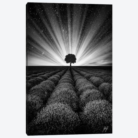 Illuminated Horizon II Canvas Print #KFD74} by Kathrin Federer Canvas Wall Art