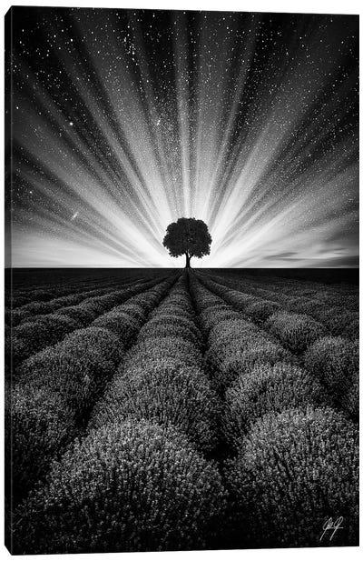 Illuminated Horizon II Canvas Art Print