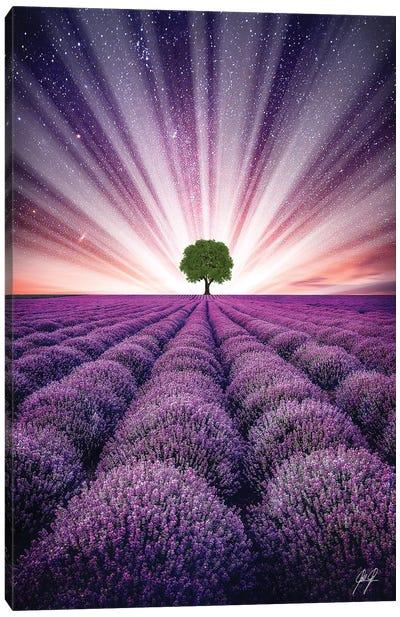 Illuminated Horizon IV Canvas Art Print