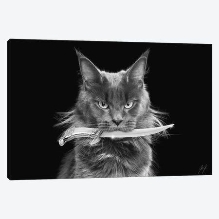 Killer Cat II Canvas Print #KFD84} by Kathrin Federer Canvas Art Print
