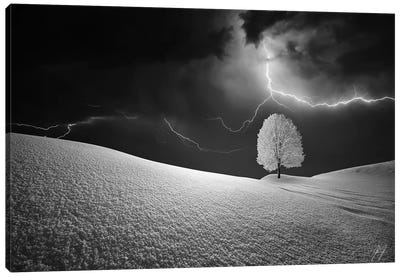 Lightning Tree Canvas Art Print