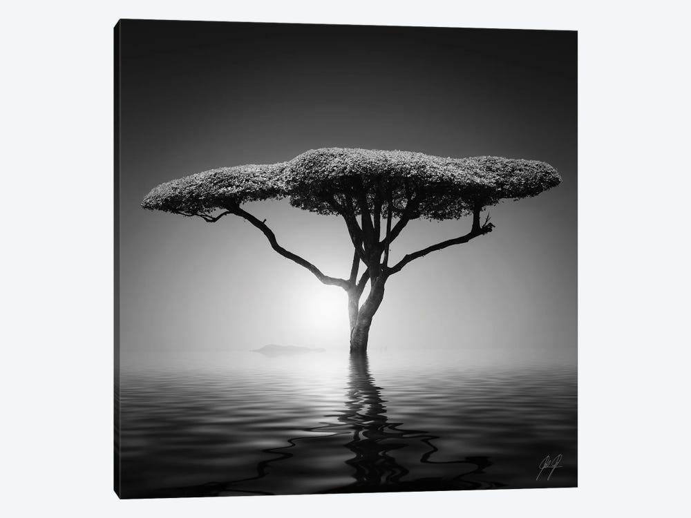 Mushroom Tree by Kathrin Federer 1-piece Art Print