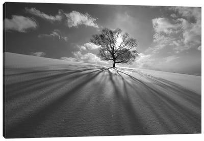 Tree Shadow Canvas Art Print