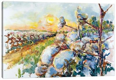 Delta Dawn Cotton Farm Canvas Art Print