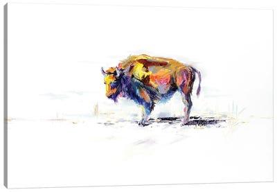 Buffalo Animal Canvas Art Print