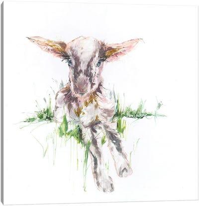 Baby Goat Oil Canvas Art Print