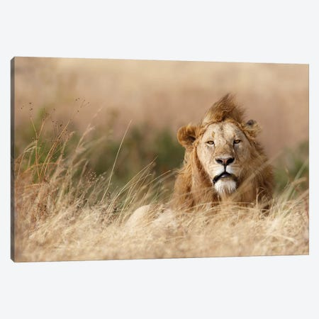 Handsome! Canvas Print #KHT1} by Ali Khataw Canvas Print