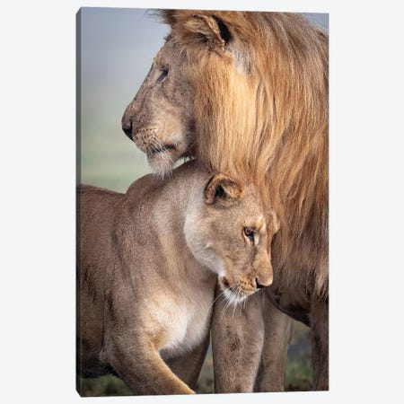 Wild Love Canvas Print #KHT2} by Ali Khataw Canvas Print
