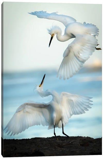 Snowy Egret Tango Canvas Art Print