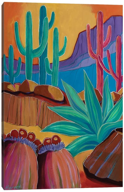 Saguaros In The Valley Canvas Art Print