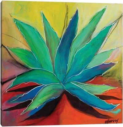 Steve's Agave Canvas Art Print