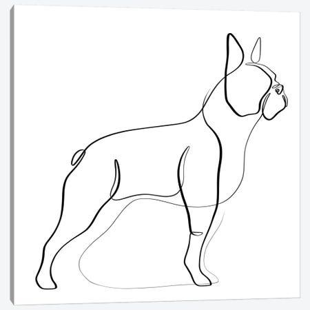 Boston Terrier Canvas Print #KHY5} by Dane Khy Canvas Print
