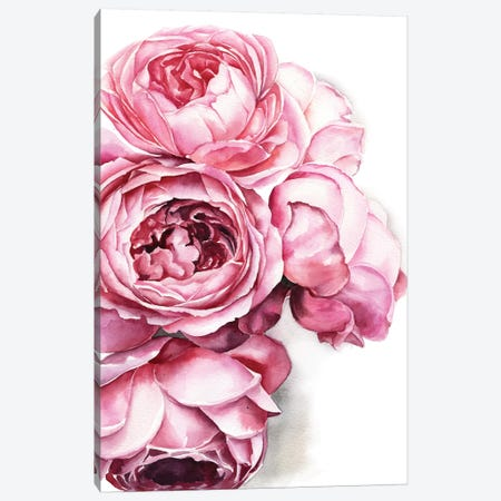 Peony Canvas Print #KIB24} by Kira Balan Canvas Print
