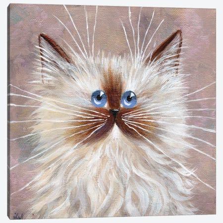 Seal Point Kitten Canvas Print #KIH122} by Kim Haskins Canvas Print