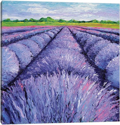 Lavender Breeze Triptych Panel II Canvas Art Print