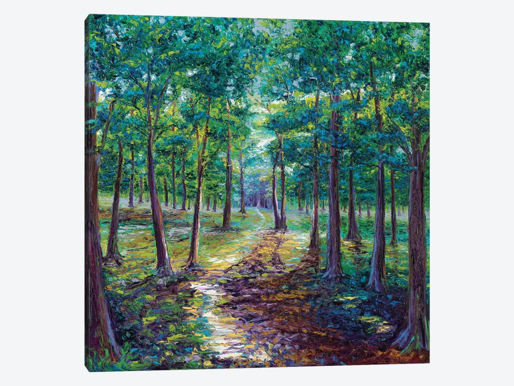 Under The Canopy by Kimberly Adams 1-piece Canvas Print