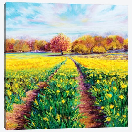 Golden Fields Canvas Print #KIM28} by Kimberly Adams Canvas Art Print