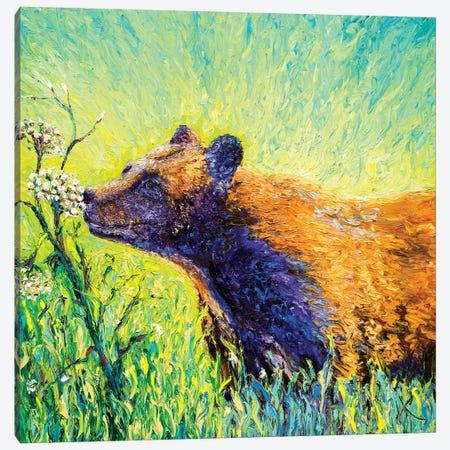Hemlock Bear Canvas Print #KIM29} by Kimberly Adams Canvas Art Print