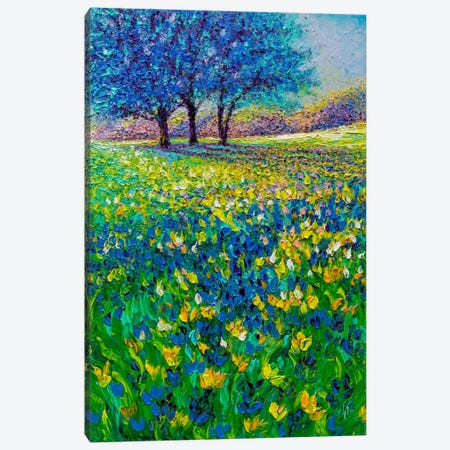 Azure Morning Canvas Print #KIM37} by Kimberly Adams Canvas Art Print