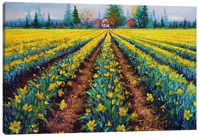 Valiant Field Of Daffodils Canvas Art Print