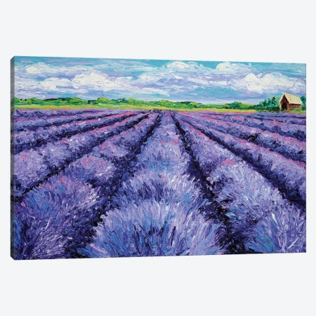 Champ de Lavande Canvas Print #KIM5} by Kimberly Adams Canvas Print