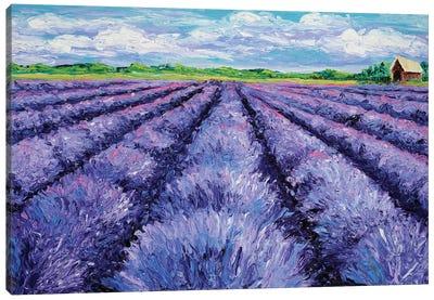 Champ de Lavande Canvas Art Print