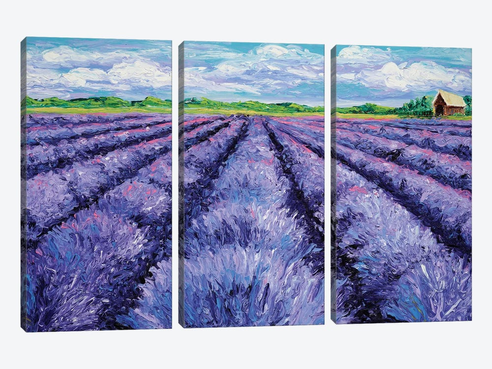 Champ de Lavande by Kimberly Adams 3-piece Canvas Artwork