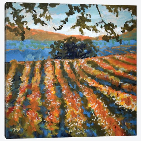 Late Afternoon Vineyard Canvas Print #KIP21} by Kip Decker Canvas Artwork