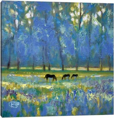 Three Mares Canvas Art Print
