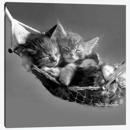 Kits in Hammock Canvas Print #KKI15} by Keith Kimberlin Canvas Art