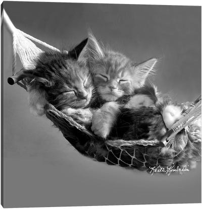 Kits in Hammock Canvas Art Print