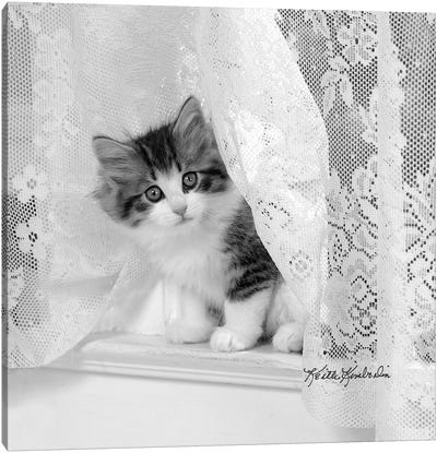 Lacie Canvas Art Print
