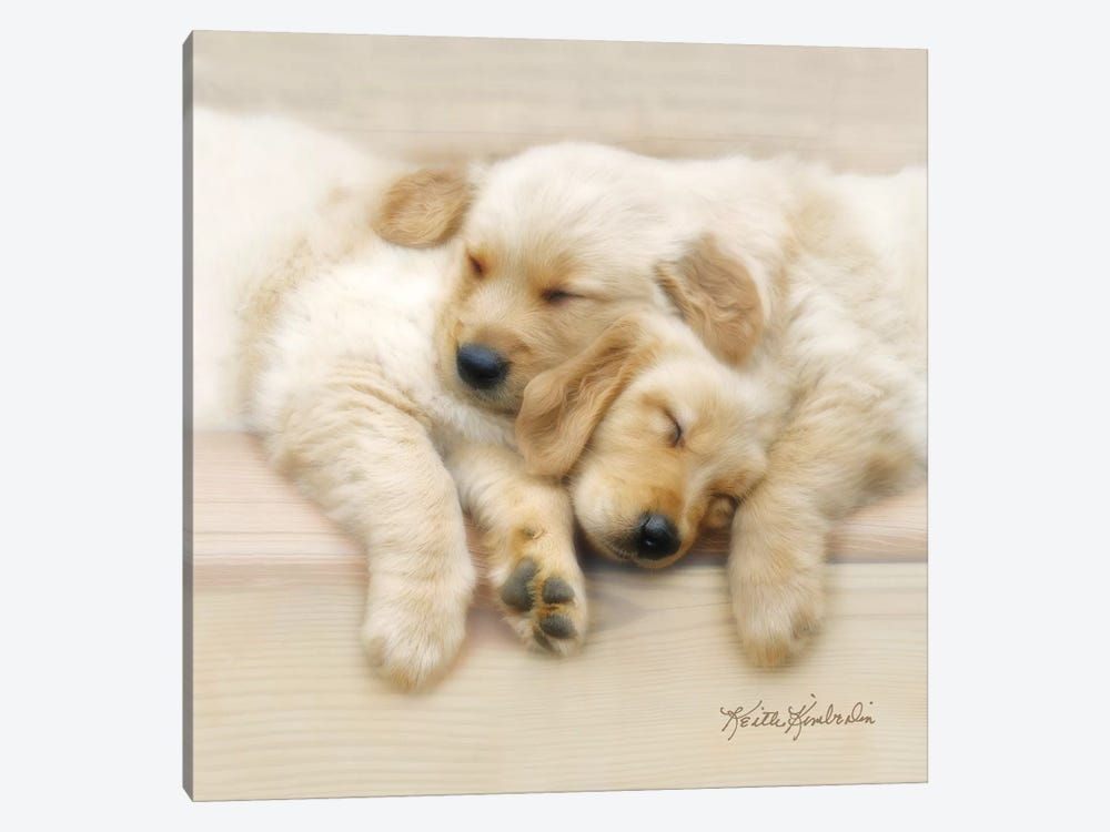 Nap Friends by Keith Kimberlin 1-piece Canvas Print