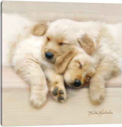 Nap Friends Canvas Art Print